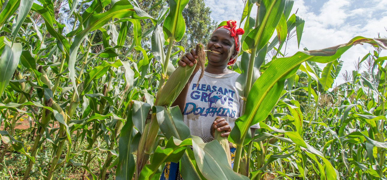 The Major Challenges Of The Agricultural Sector In Kenya – KARI org